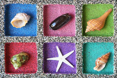 Sea Shell composition Stock Photo