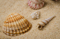 Sea shell and conch on sand Royalty Free Stock Photography