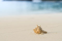 Sea shell crab on the beach. In the morning on island Royalty Free Stock Photography