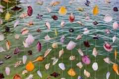 Sea shell curtain Stock Photography