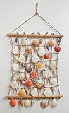 Sea shell decor Royalty Free Stock Photos