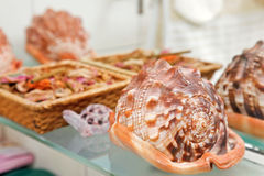 Sea shell decor Stock Photography