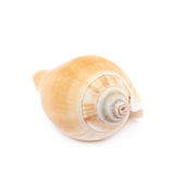 Sea shell. Decorational sea shell over the white background stock image