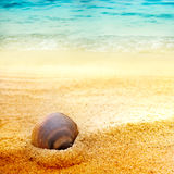 Sea shell on fine sand Stock Photography