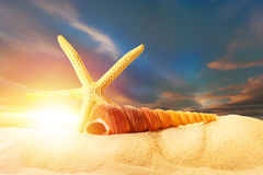 Sea shell and fingerfish in sand on sunset. Background Stock Photography