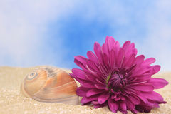 Sea Shell and Flower Royalty Free Stock Image