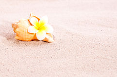 Sea shell and flower on beach sand Stock Images