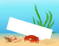 Sea shell frame. Vector illustartion, AI file included Stock Photo