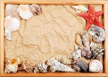 Sea shell frame Stock Image