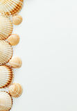 Sea shell - frame Royalty Free Stock Image
