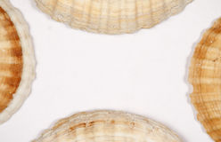 Sea shell frame border background. Top view. Stock Photos