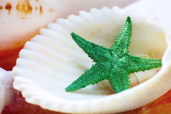Sea shell. And a green star Royalty Free Stock Images