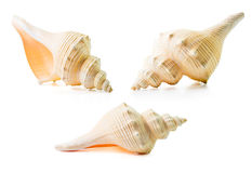 Sea shell group Royalty Free Stock Image