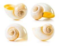 Sea shell group Stock Photography