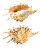 Sea shell group Royalty Free Stock Photography