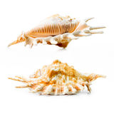 Sea shell group Stock Photo