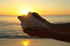Sea shell in hands Royalty Free Stock Images