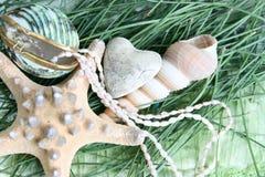 Sea shell heart Royalty Free Stock Photography