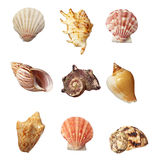 Sea shell holiday travel Royalty Free Stock Image