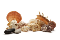 Sea shell holiday travel Stock Images