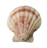 Sea shell holiday travel Royalty Free Stock Photos
