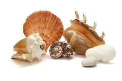 Sea shell holiday travel Royalty Free Stock Photography