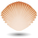 Sea shell icon Stock Photo