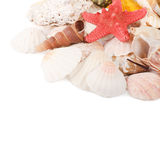 Sea shell  isolated on a white Stock Photography
