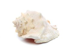 Sea shell isolated on white Royalty Free Stock Photo