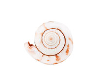Sea shell isolated. On a white background Stock Image