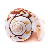 Sea shell isolated Royalty Free Stock Images