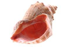 Sea shell isolated Stock Photography