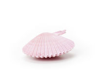 Sea shell, isolated on white background Stock Images