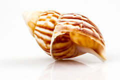 Sea shell isolated on white background Stock Image