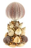 Sea shell lamp Stock Image