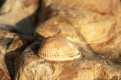 Sea shell laying on the stone near the seashore Stock Photo
