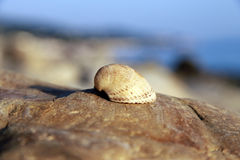 Sea shell laying on the stone near the seashore Stock Photos