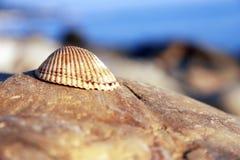 Sea shell laying on the stone near the seashore Stock Photos