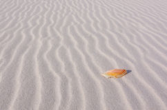 Sea Shell in the Lines of Sand stock photo