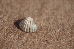 Sea shell lying on the beach. Beautiful rounded sea shell lying on the sandy beach Royalty Free Stock Photo