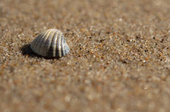 Sea shell lying on the beach. Beautiful rounded sea shell lying on the sandy beach Royalty Free Stock Photos