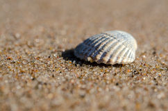 Sea shell lying on the beach Stock Images