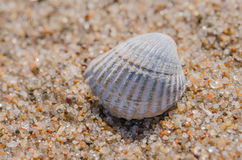Sea shell lying on the beach. Beautiful rounded sea shell lying on the sandy beach Stock Photo