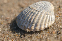 Sea shell lying on the beach Stock Image