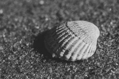 Sea shell lying on the beach. Beautiful rounded sea shell lying on the sandy beach. Black and white Royalty Free Stock Images
