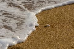 Sea shell lying on the sand. Sea wave with foam. royalty free stock photos