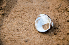 Sea shell lying on the sandy beach Royalty Free Stock Photos