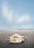 Sea shell lying on a sandy beach Royalty Free Stock Photography