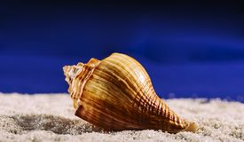 The sea shell is lying on a white pebble royalty free stock photos