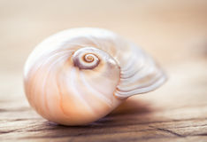 Sea shell macro, close up.Beach decoration still life. Stock Photo